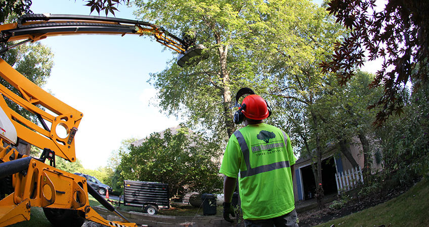 Large Tree Removal Service