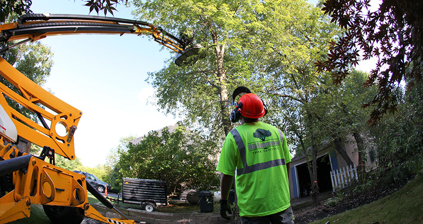 Top Four Tips for Hiring a Large Tree Removal Service