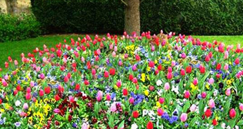How to prepare your flower beds and trees carefully in spring flower beds mightylinksfo