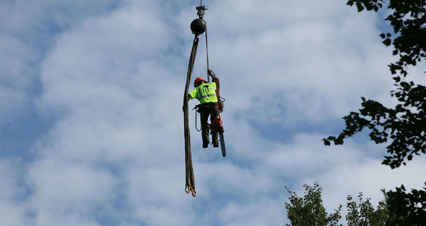 scheduling a tree services